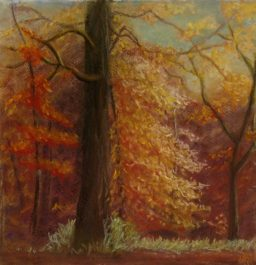 """Autumn Light on Tree"" $160"